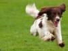 Hondenuitlaatdienst_Dogsjob