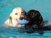 EHBO Hondenuitlaatdienst Dogsjob